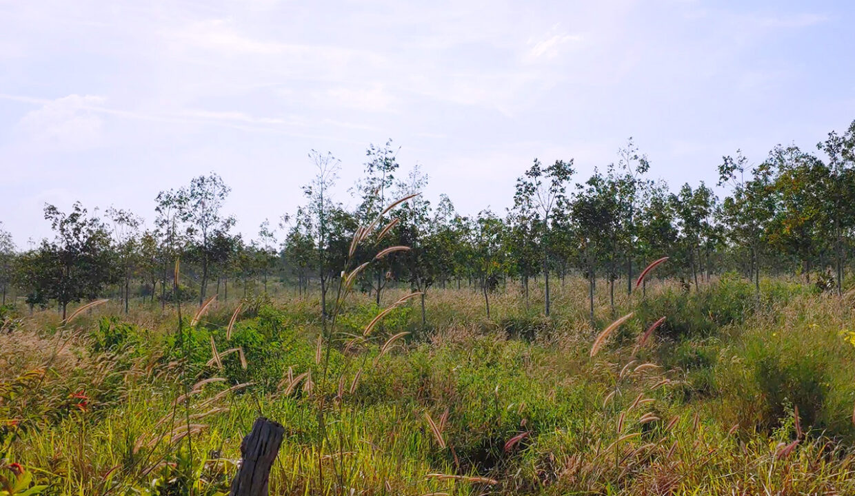 143 Hectares Land For Sale In Phnom Sruoch District Img2