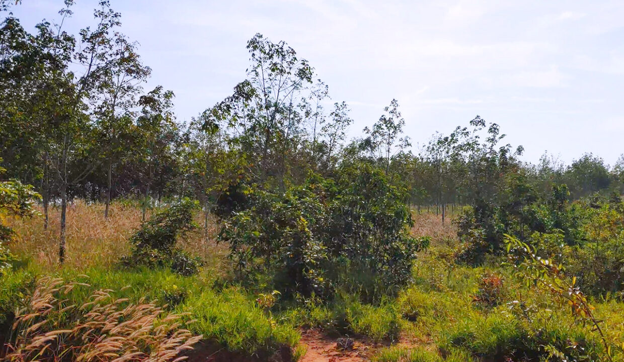 143 Hectares Land For Sale In Phnom Sruoch District Img3