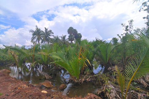 15449 Sq,m Land Next To Stream For Sale @ Kampot Province Img5